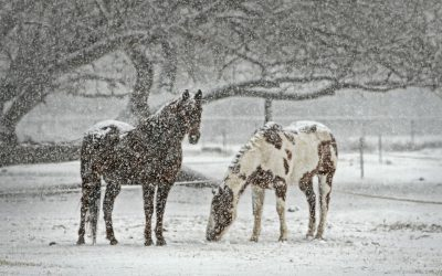 5 Myths about Winter Horse Care