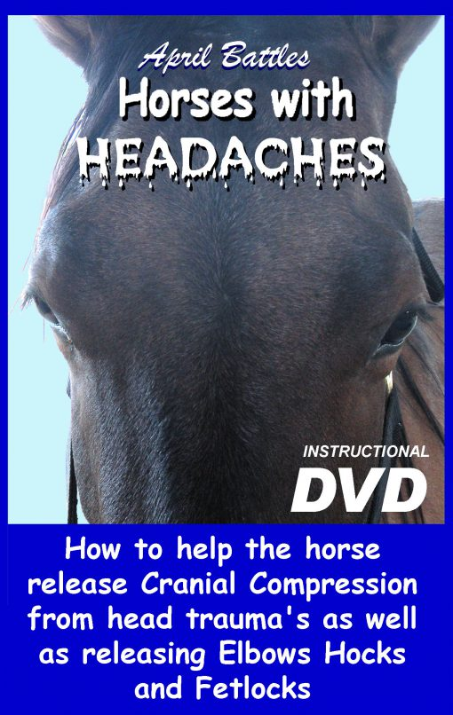 Equine CranioSacral Energy Work -Watch Instantly [English and French]