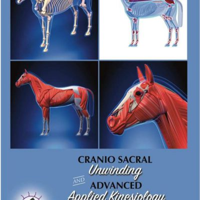 Level 2 Equine Cranio Sacral Unwinding and Advanced Applied Kinesiology Home Study Course -watch instantly