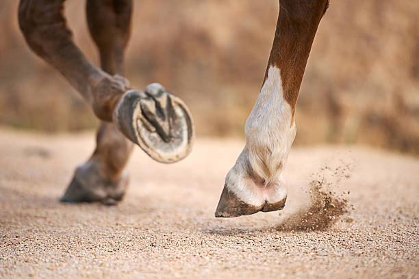 No Hoof – No Horse